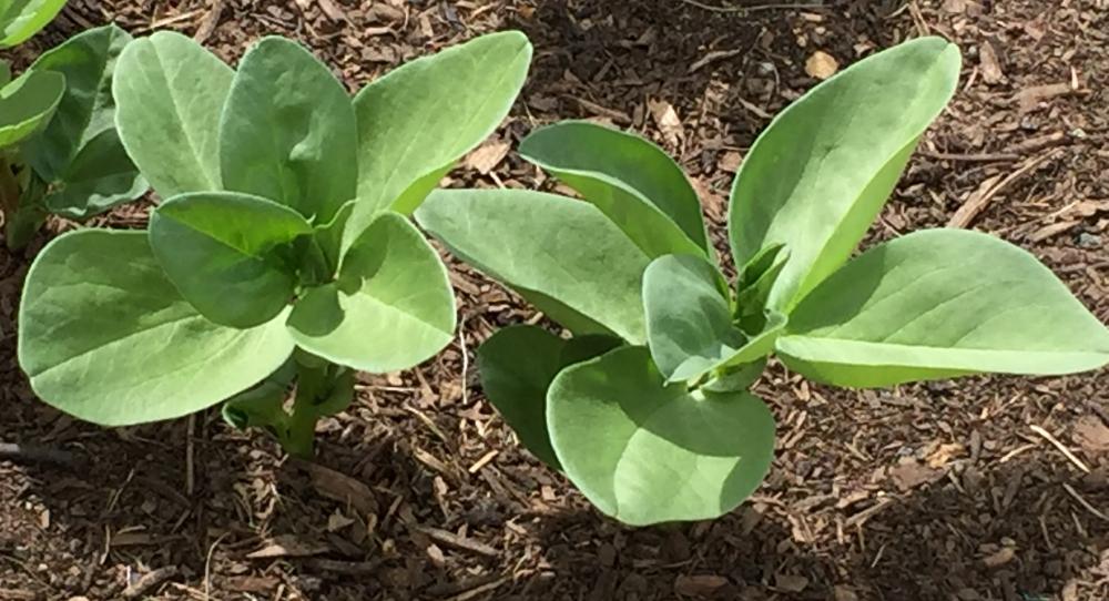 små planter2